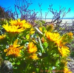 cropped-flowers-1.jpg