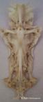 Crux fish 2